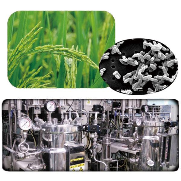 グラム陰性細菌を利用した免疫賦活発酵食品素材の開発のイメージ画像